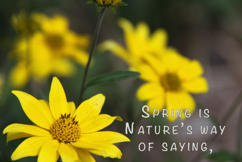 Spring is Nature's way of saying let's party. Photo of spring daisies taken by Louellen S. Coker.
